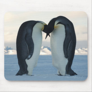 Emperor Penguin Courtship Mouse Pad