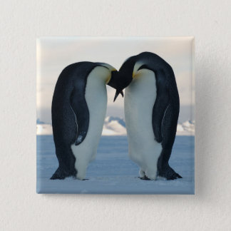 Emperor Penguin Courtship Pinback Button