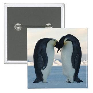 Emperor Penguin Courtship Pinback Button