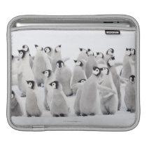 Emperor penguin iPad sleeve