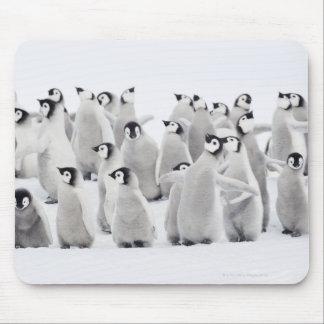 Emperor penguin mouse pad