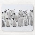 Emperor penguin mouse pads