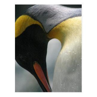 Emperor Penguin Postcard
