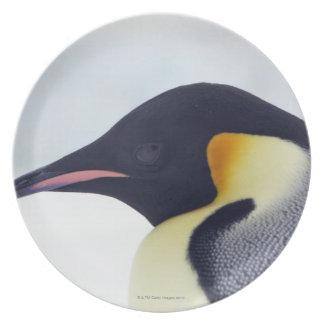 Emperor Penguin, Snow Hill Island Party Plates
