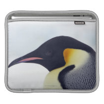 Emperor Penguin, Snow Hill Island Sleeve For iPads