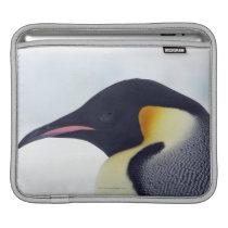 Emperor Penguin, Snow hill island, Weddel Sea iPad Sleeve