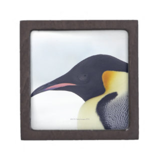 Emperor Penguin, Snow hill island, Weddel Sea Keepsake Box