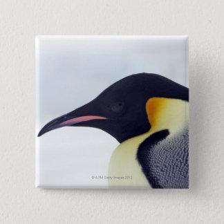 Emperor Penguin, Snow hill island, Weddel Sea Pinback Button