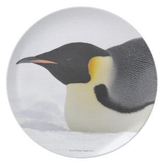 Emperor Penguin, Snow Hill Island, Weddell Sea, Melamine Plate