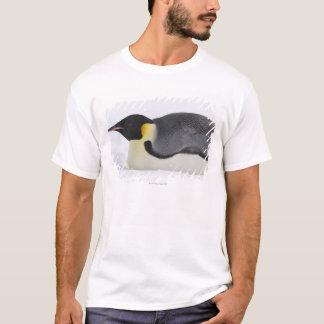 Emperor Penguin, Snow Hill Island, Weddell Sea, T-Shirt