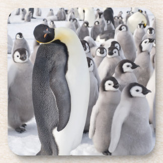 Emperor Penguin with Chicks - beverage coaster