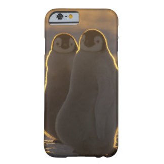 Emperor Penguins, Aptenodytes forsteri), 2 Barely There iPhone 6 Case