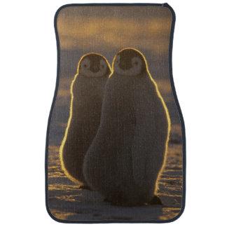 Emperor Penguins, Aptenodytes forsteri), 2 Car Mat