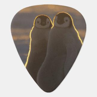 Emperor Penguins, Aptenodytes forsteri), 2 Guitar Pick