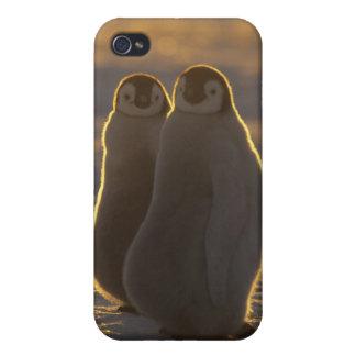 Emperor Penguins, Aptenodytes forsteri), 2 iPhone 4 Case