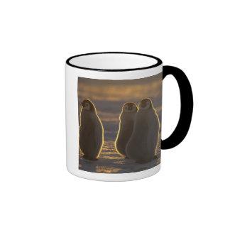 Emperor Penguins, Aptenodytes forsteri), 2 Mug