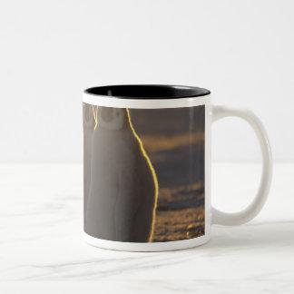 Emperor Penguins, Aptenodytes forsteri), 2 Two-Tone Coffee Mug