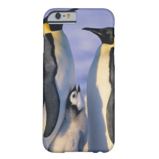 Emperor Penguins (Aptenodytes forsteri) Adults Barely There iPhone 6 Case