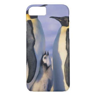 Emperor Penguins (Aptenodytes forsteri) Adults iPhone 7 Case