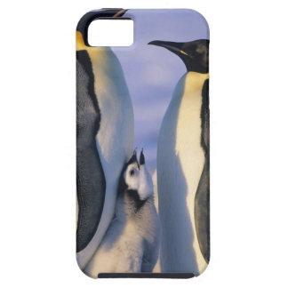 Emperor Penguins (Aptenodytes forsteri) Adults iPhone SE/5/5s Case
