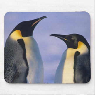 Emperor Penguins (Aptenodytes forsteri) Adults Mouse Pad