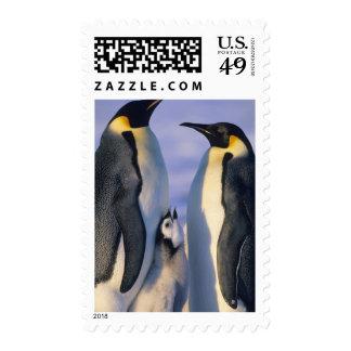 Emperor Penguins Aptenodytes forsteri Adults Postage