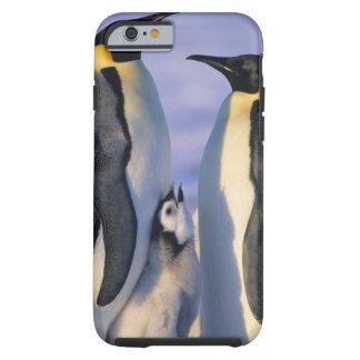 Emperor Penguins (Aptenodytes forsteri) Adults Tough iPhone 6 Case