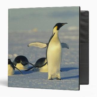 Emperor Penguins, Aptenodytes forsteri), Binder