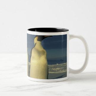 Emperor Penguins, Aptenodytes forsteri), Mt. Mugs
