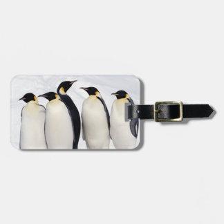 Emperor Penguins Bag Tag