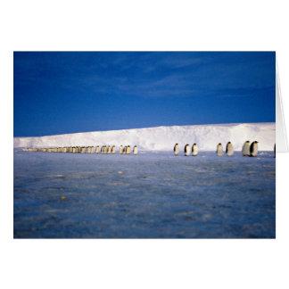 Emperor penguins by moonlight, Antarctica Greeting Cards