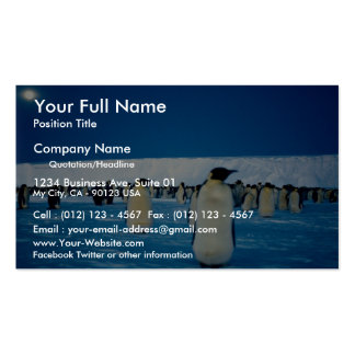 Emperor penguins by moonlight, Antarctica Double-Sided Standard Business Cards (Pack Of 100)