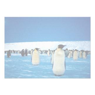 Emperor penguins by moonlight, Antarctica Personalized Invite