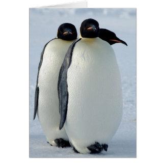 Emperor Penguins Huddled Card
