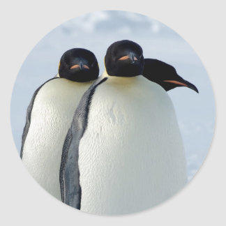 Emperor Penguins Huddled Classic Round Sticker