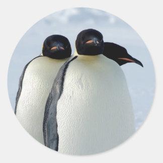 Emperor Penguins Huddled Classic Round Sticker