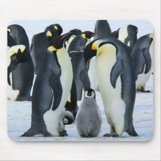 Emperor penguins mouse pad
