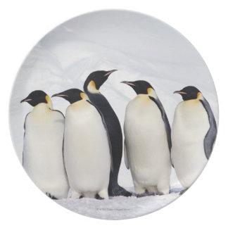 Emperor Penguins Plate