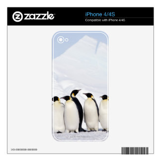 Emperor Penguins Skins For The iPhone 4S