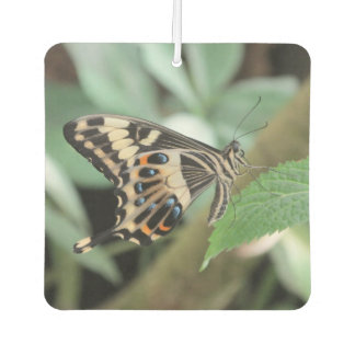 Emperor Swallowtail Butterfly Air Freshener