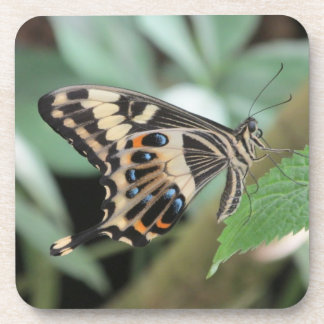 Emperor Swallowtail Butterfly Coasters