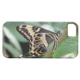 Emperor Swallowtail Butterfly iPhone 5 Case
