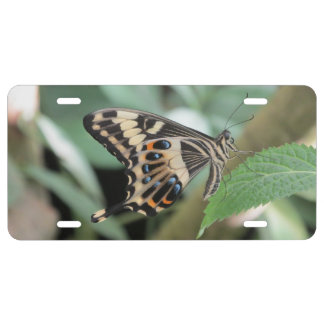 Emperor Swallowtail Butterfly License Plate