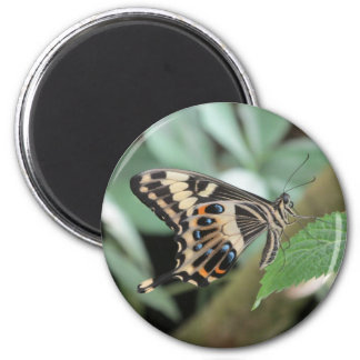 Emperor Swallowtail Butterfly Magnet
