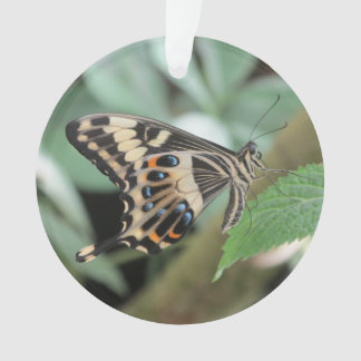Emperor Swallowtail Butterfly Ornament