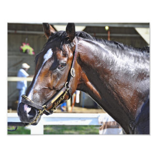 "Empire Stakes Winner ""Saratoga Snacks"" Photo Print"
