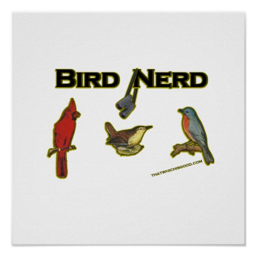 Empollón del pájaro póster