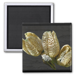 Empty Lily Seed Pods Coordinating Items Magnet