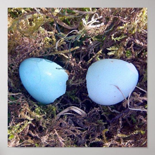 Empty Robin Eggs Basic Print