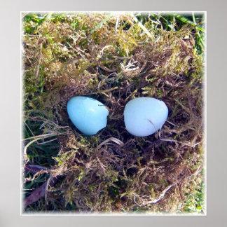 Empty Robin Eggs Canvas Poster